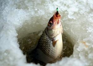 Новые правила в рыболовстве и охоте