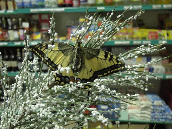 Без особых финансовых затрат работники магазина «Дары природы» сотворили настоящее новогоднее чудо