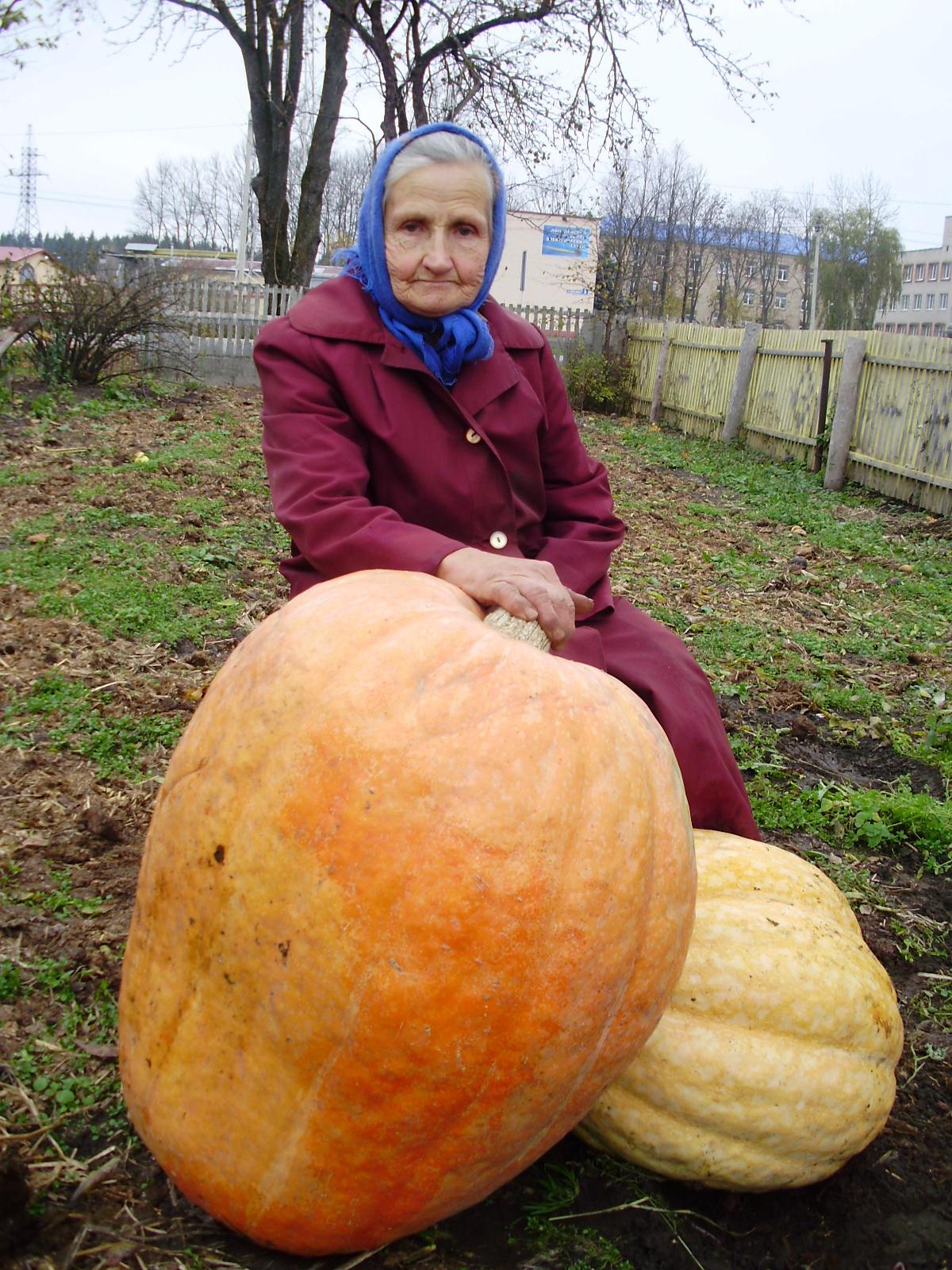 Тыква-гигант в 40 кг выросла на грядке семьи Кизеевых