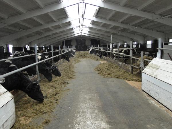 Когда для «Клевцов» настанет время большого молока?