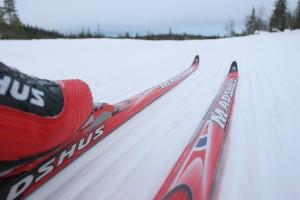 Лиозно: В эти выходные в аг. Пушки пройдет «Белорусская лыжня»