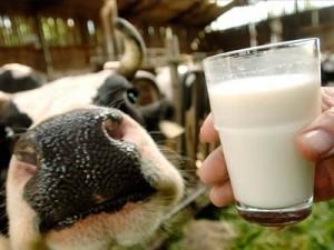 Повысились закупочные цены на молоко