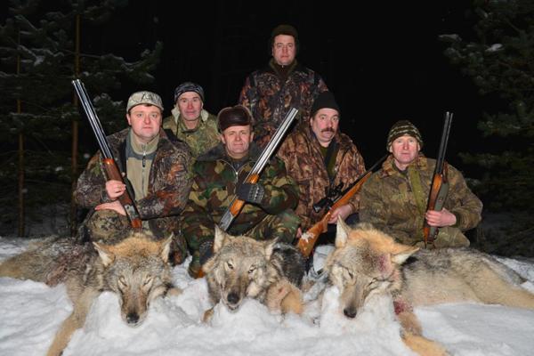 Сколько длится охота на волков?