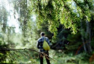Если заблудились в лесу