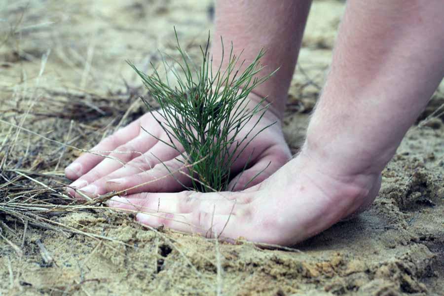 «Неделя леса» стартует 1 апреля