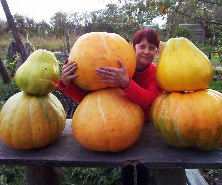 Крупный урожай собрала жительница Лиозно С. А. Бабичева