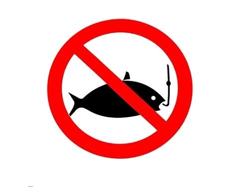 Запрет на любительское рыболовство на участке Западной Двины