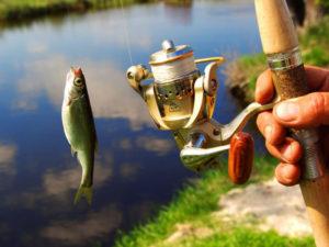 Рыболовам  на заметку