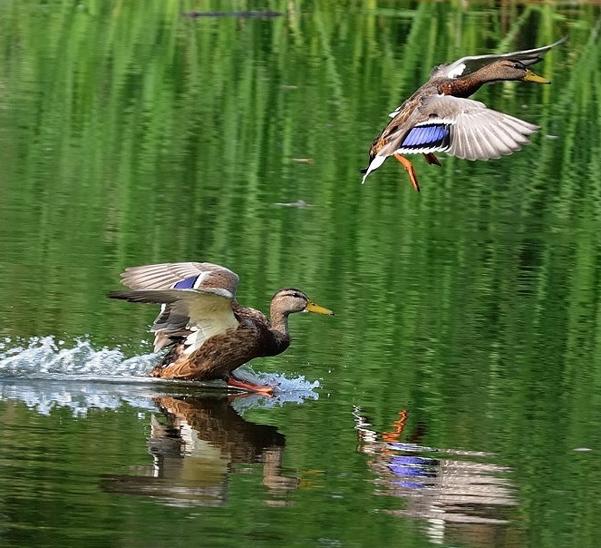 Открытие  летне-осеннего сезона охоты