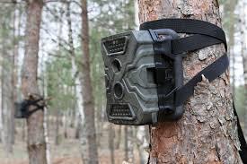 Фотоловушки на страже леса