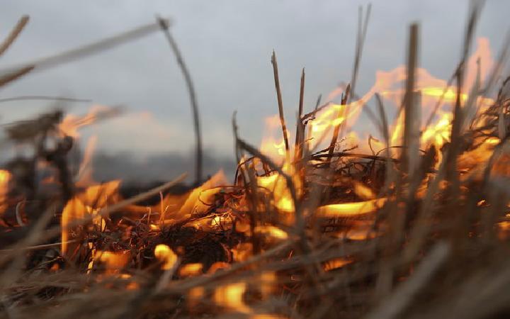 Просто смотреть за горением травы, не значит контролировать