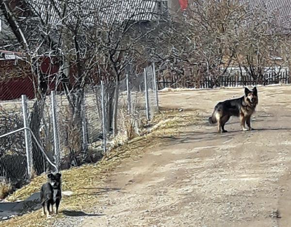 К собачьей безопасности по-человечески