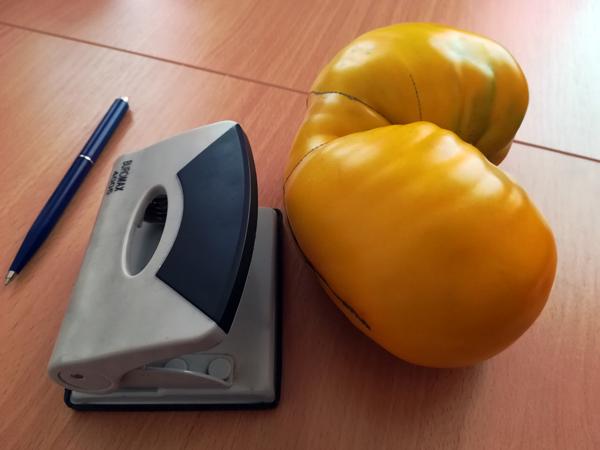 Жительница Лиозно вырастила томат весом 912 граммов