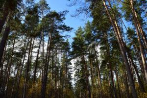 О снятии  запрета на посещение лесов