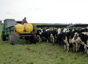 Май – в поле коров выгоняй
