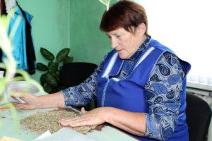 Качественные семена – залог хорошего урожая