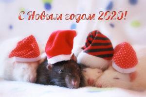 С Новым Годом! (ВИДЕО)