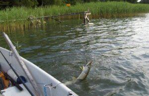 Лов рыбы на дорожку